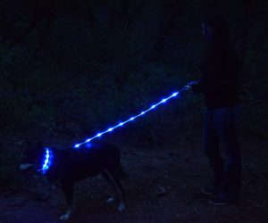 Premium Dog Leash With Light