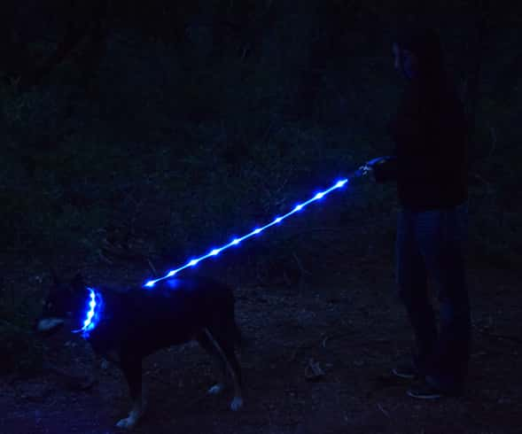 Lighted Dog Leashes