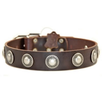 Concho Leather Dog Collar